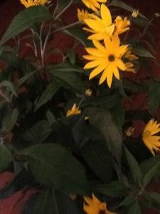Prachtige bloemen van de aardpeer