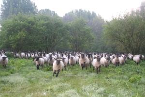 Fijn, we mogen weer. Op pad met de herder.