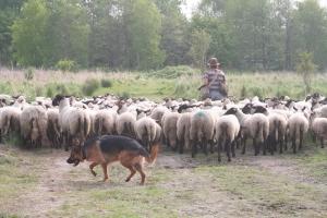 Elke hond heeft de neiging de troepen bij elkaar te willen houden.