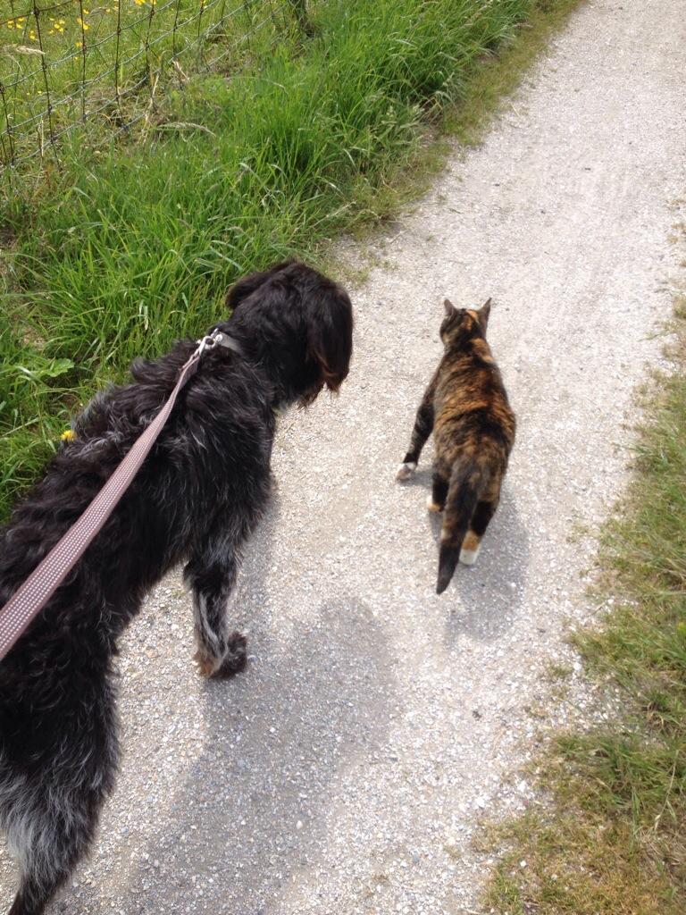 Kat en hond op de Aalsdijk