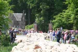 Het verkeer wordt stilgelegd als de kudde oversteekt.